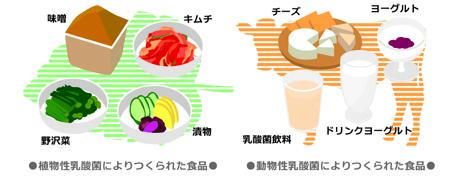 乳酸菌画像