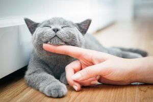 体臭 猫 種類